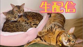 【生配信4/11】本日はおとんちゃん誕生日でした生配信(おとんちゃん不在)
