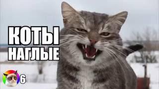 коты наглые коварные кот ад
