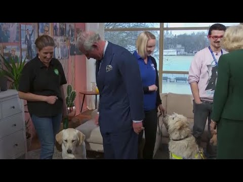 Guide Dogs in Training Not Impressed by Prince Charles