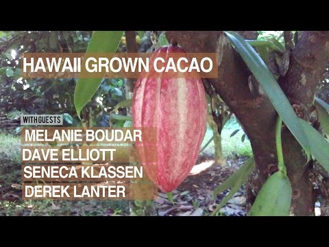 Chocolate Masters Hangout #3: The Rise of Hawaii Grown Cacao