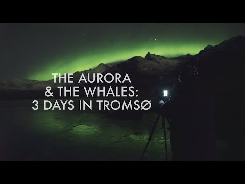 The Aurora & The Whales