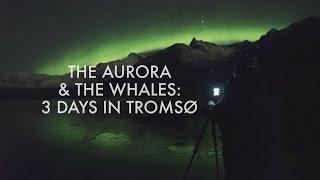 Video The Aurora & The Whales download MP3, 3GP, MP4, WEBM, AVI, FLV November 2018