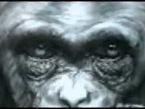 El mono sabio Truco de cartas