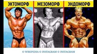 Типы телосложения Как тренироваться и питаться