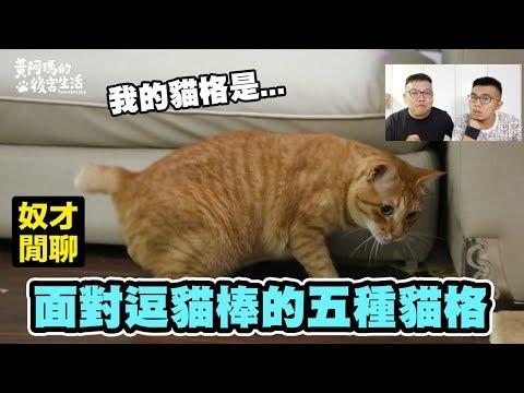 【面對逗貓棒的五種貓格?你的喵是哪種呢?】志銘與狸貓閒聊