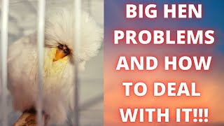 Common Problem With Bİg Budgie Hens | How To Deal With IT