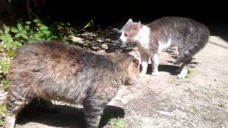 Коты-сепаратисты