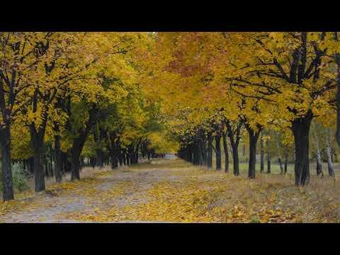 Bruno Martini & Timbaland - Road (ft. Johnny Franco)