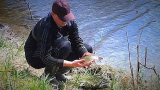 Рыбалка на карася. Ловля карася на поплавок. Поклевки крупным планом.