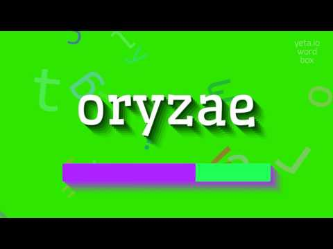 "How to say ""oryzae""! (High Quality Voices)"