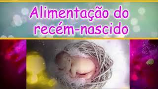 PROJETO AMOR DE MÃE 12 EPISÓDIO