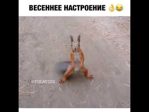 ЯПлакалъ - Разделы -> Видео