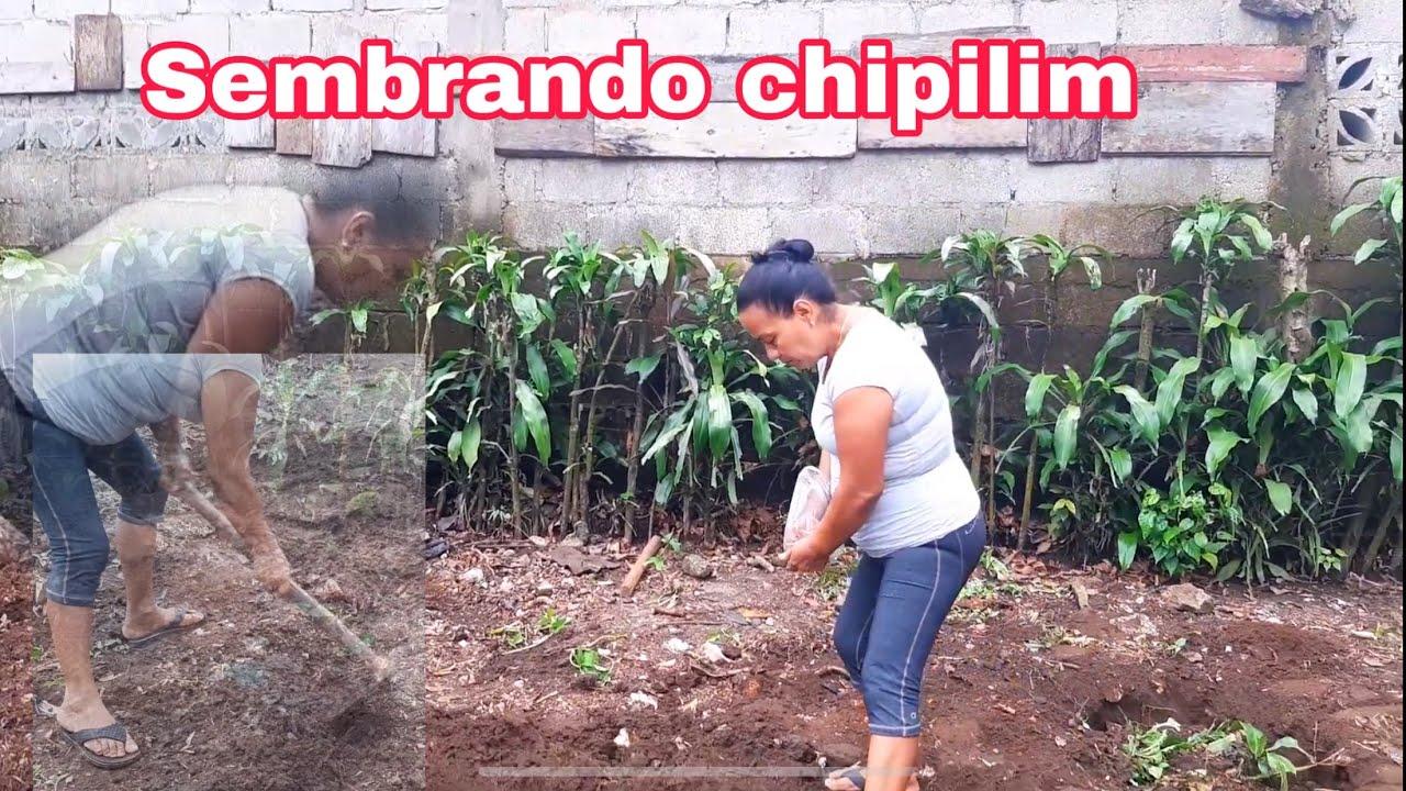Tía Bertha sembrando chipilin!! Chapinas en acción