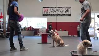 Dog Training Workshop | Sitmeanssit.com