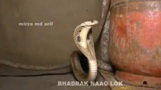 নাগ নাগিনীর মিলন।Nag naginir milon গ্রামীণ কিচ্ছাপালা । সিরাজ খান ।2020 New kissa by Mahim music