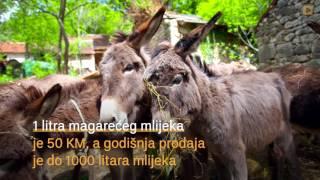 Zapętlaj Najveća farma magaraca u BiH i mlijeko koje liječi | vidiovo