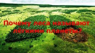 Почему леса называют легкими нашей планеты