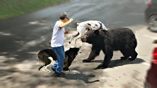10 Dog Breeds That Can Defend You From A Bear