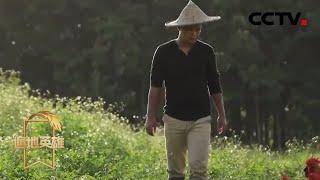 《遍地英雄》 20200418 原生态农产品电商新农人|CCTV农业