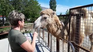 """Парк львов """"Тайган"""" - Крымское Сафари.большое разнообразие птицы и животных"""