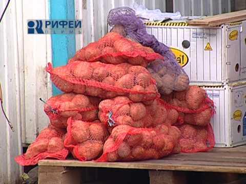 Сюжет   болезнь картофеля