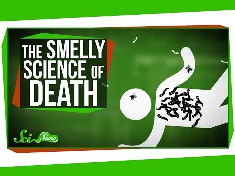 The Strange, Smelly Science of Decomposing Bodies