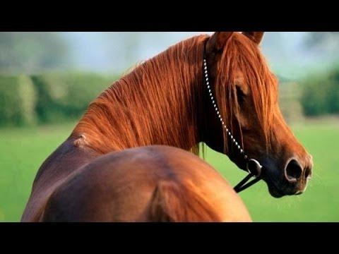 Лошади - самые красивые существа на планете!