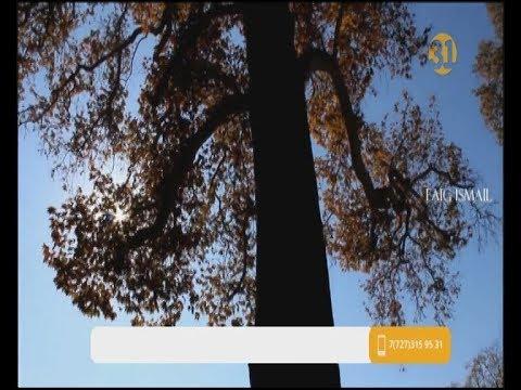 В Азербайджане ветка 500-летнего дерева придавила 19 человек