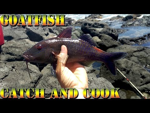 Goatfish Catch and Cook - Hunting Down Big Island Shore Fishing Spots And Giant Fish -  BODS 36