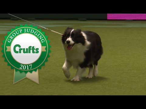 Pastoral Group Judging and Presentation | Crufts 2017