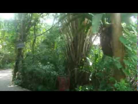 2014 02 Pattaya Pratumnak Soi 4 BIRDS & BEES RESORT Tropic Garden Impressions Photo Show