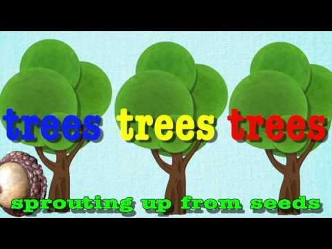 Head Shoulders Knees and Toes for Trees!