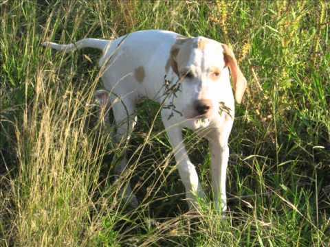 Película perros caza.wmv