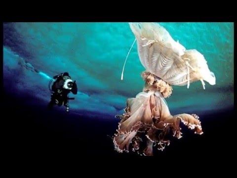 The Underwater World Of Antarctica HD 2014 HD