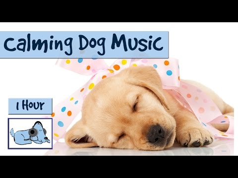1 Hour of Calming Music for Dogs!