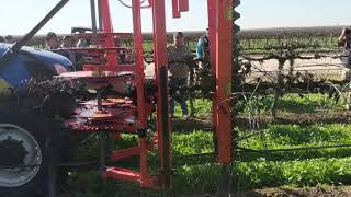 Gambar cover Mechanical Pruning Becoming More Viable for Grape Producers