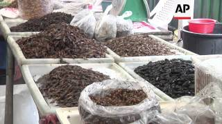 Edible insects are nutritious and some say delicious