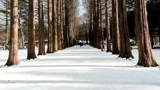 Richard Clayderman   -  Winter Sonata