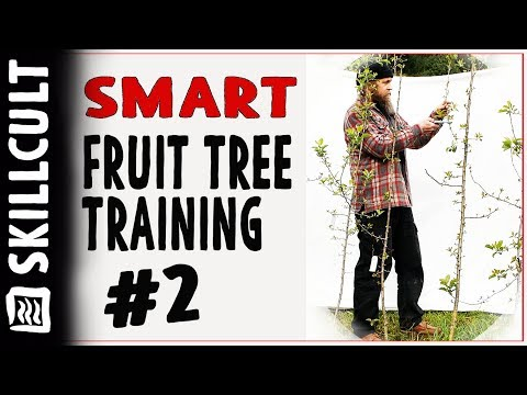 Smart Fruit Tree Training #2:  Two and Three Year Old Trees, Remedial Training