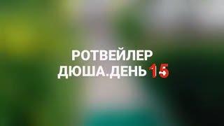 РОТВЕЙЛЕР ДЮША.ДЕНЬ 15