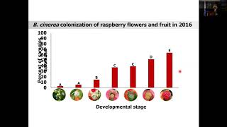 How Does Botrytis Cinerea Infect Red Raspberry? Olga Kozhar