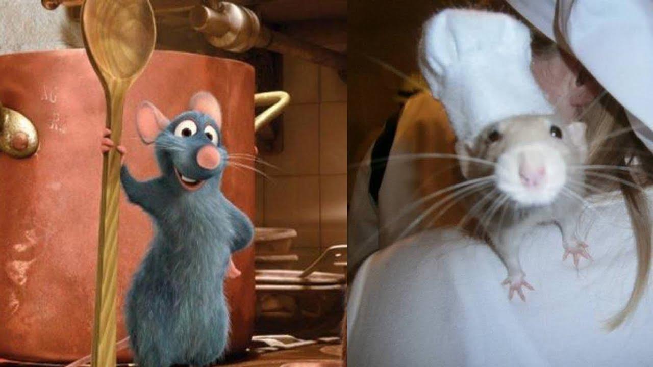 Ratatouille In Real Life All Characters Disney Pixar Cartoon Youtube