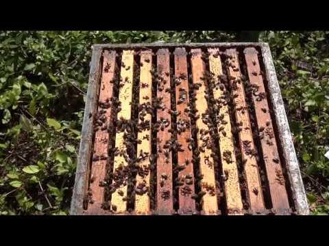 Landi Simone - Counting Frames of Bees