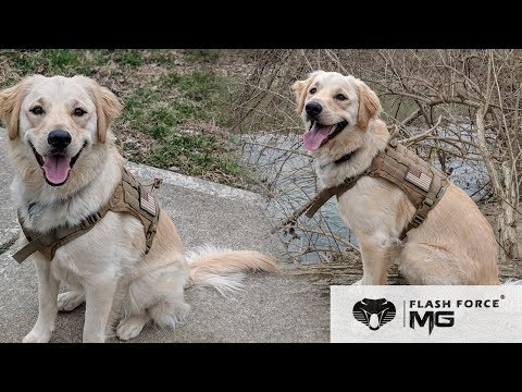 MGFLASHFORCE Tactical Dog Harness Review | Military Dog Service Vest | Best Dog Harness 2019