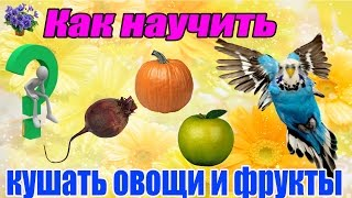 Кормление  волнистого попугая фруктами и овощами. Часть 1-я