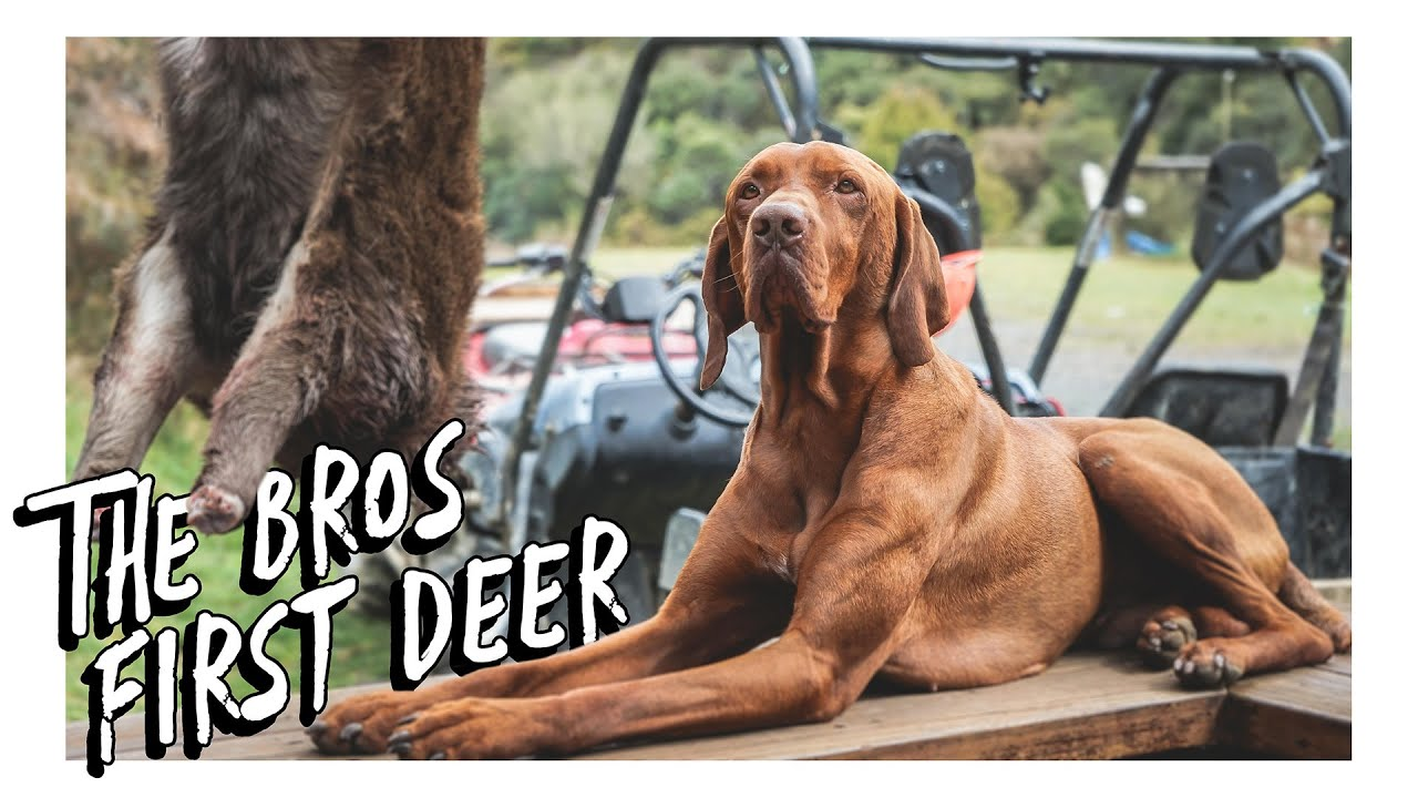 Weekend Meat Hunt | The Bros First Deer | Catch & Cook with Wildguide NZ