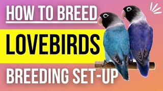 How to Setup a Lovebird Breeding Cage