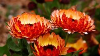 早春の小さな花たち(北山緑化植物園にて)