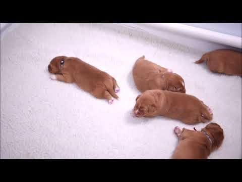 Deseree's Puppies Present: Proto-Play and Proto-Walk