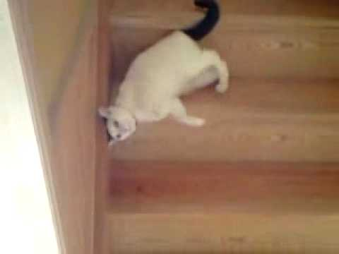 Thumbnail for Cat Video Funny cat going down the stairs